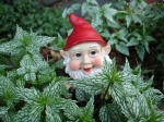 Gnome from State Street
